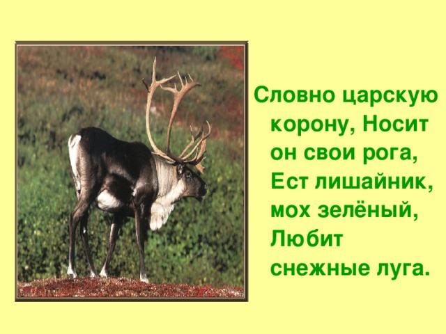 Словно царскую корону, Носит он свои рога, Ест лишайник, мох зелёный, Любит снежные луга.