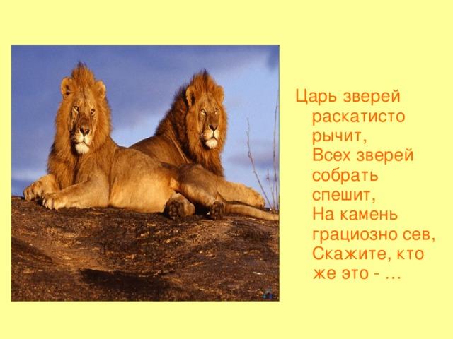 Царь зверей раскатисто рычит,  Всех зверей собрать спешит,  На камень грациозно сев,  Скажите, кто же это - …