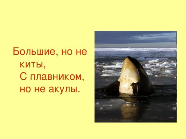 Большие, но не киты,  С плавником, но не акулы.