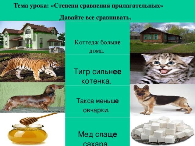 Тема урока: «Степени сравнения прилагательных» Давайте все сравнивать. Коттедж больш е дома.  Тигр сильн ее котенка.  Такса меньш е овчарки.  Мед слащ е сахара.