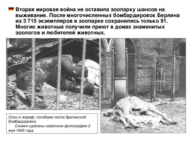 Вторая мировая война не оставила зоопарку шансов на выживание. После многочисленных бомбардировок Берлина из 3 715 экземпляров в зоопарке сохранились только 91. Многие животные получили приют в домах знаменитых зоологов и любителей животных.