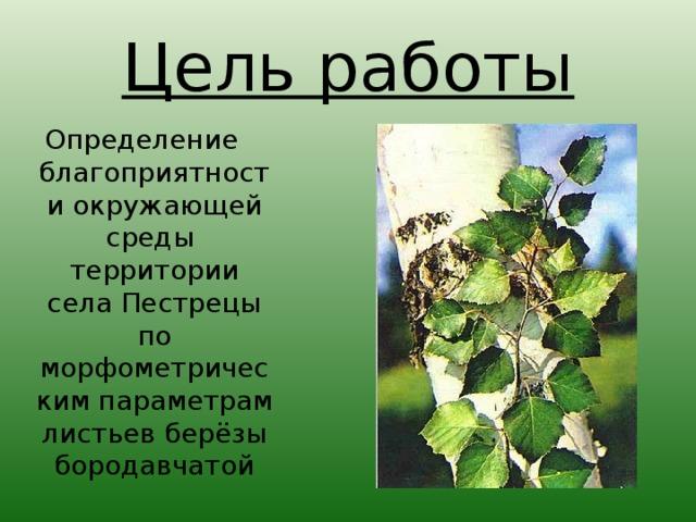 Цель работы Определение благоприятности окружающей среды территории села Пестрецы по  морфометрическим параметрам листьев берёзы бородавчатой