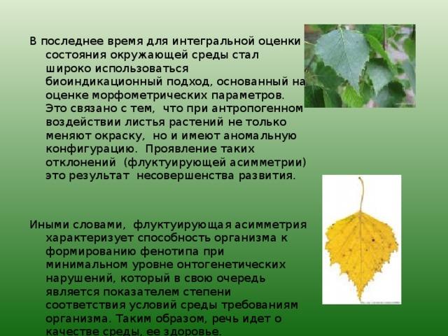 В последнее время для интегральной оценки состояния окружающей среды стал широко использоваться биоиндикационный подход, основанный на оценке морфометрических параметров. Это связано с тем, что при антропогенном воздействии листья растений не только меняют окраску, но и имеют аномальную конфигурацию. Проявление таких отклонений (флуктуирующей асимметрии) это результат несовершенства развития. Иными словами, флуктуирующая асимметрия характеризует способность организма к формированию фенотипа при минимальном уровне онтогенетических нарушений, который в свою очередь является показателем степени соответствия условий среды требованиям организма. Таким образом, речь идет о качестве среды, ее здоровье.