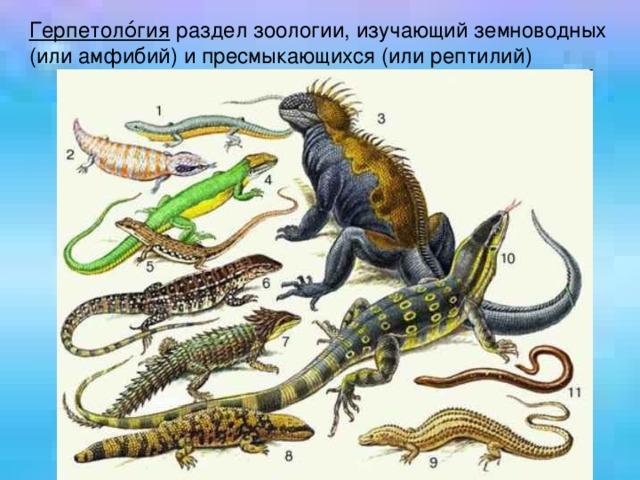 Герпетоло́гия раздел зоологии, изучающий земноводных (или амфибий) и пресмыкающихся (или рептилий)