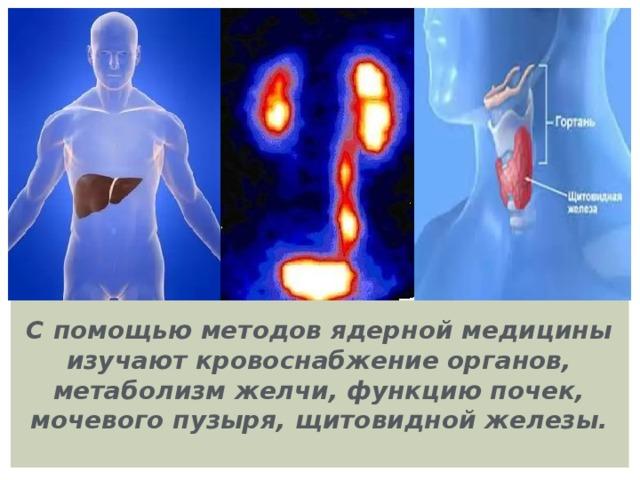 С помощью методов ядерной медицины изучают кровоснабжение органов, метаболизм желчи, функцию почек, мочевого пузыря, щитовидной железы.