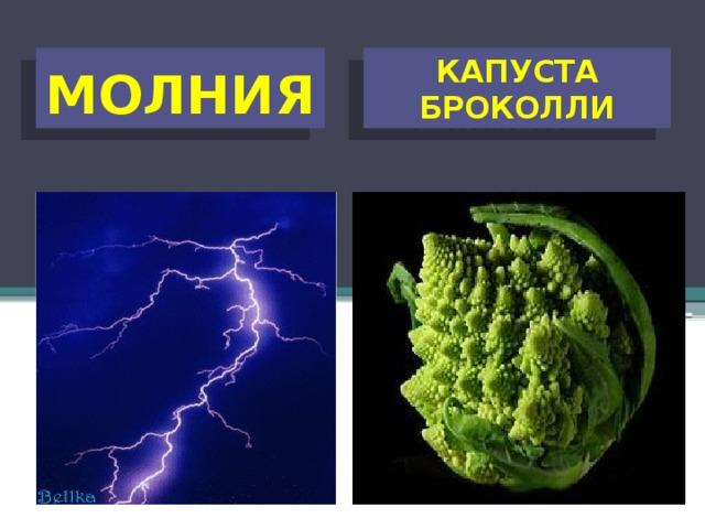 КАПУСТА БРОКОЛЛИ МОЛНИЯ