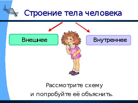 конспект и презентация урока окружающего мира по теме