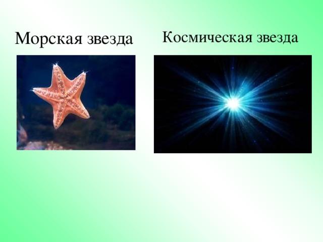 Морская звезда Космическая звезда