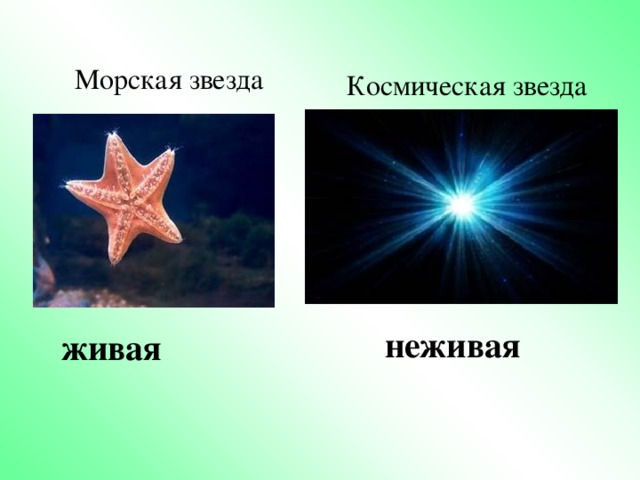 неживая  Морская звезда Космическая звезда  живая