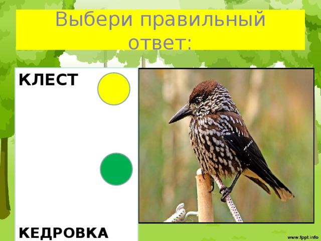 Выбери правильный ответ: КЛЕСТ        КЕДРОВКА