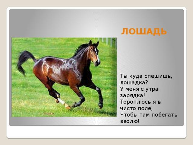 лошади стихи короткие равносторонний крест встречается