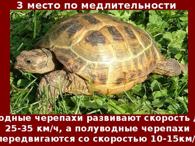 3 место по медлительности Водные черепахи развивают скорость до 25-35 км/ч, а полуводные черепахи передвигаются со скоростью 10-15км/ч