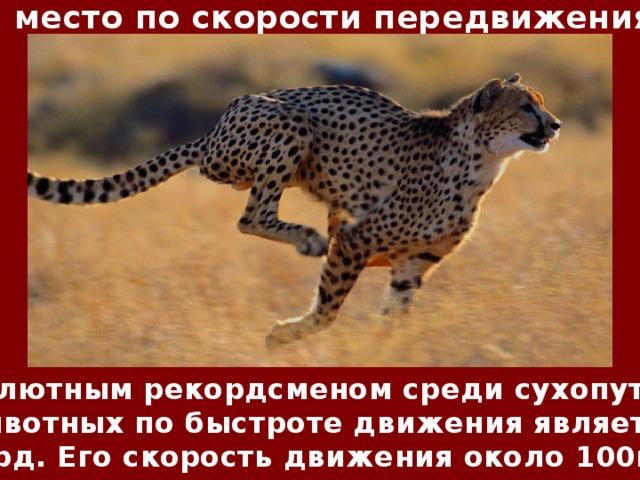 1 место по скорости передвижения Абсолютным рекордсменом среди сухопутных животных по быстроте движения является гепард. Его скорость движения около 100км/ч.