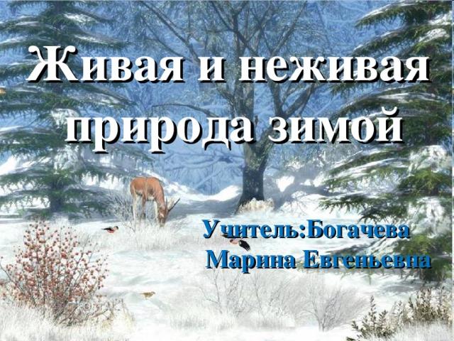Живая и неживая  природа зимой   Учитель:Богачева  Марина Евгеньевна