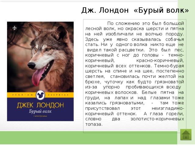 Дж. Лондон «Бурый волк»  По сложению это был большой лесной волк, но окраска шерсти и пятна на ней изобличали не волчью породу. Здесь уже явно сказывалась собачья стать. Ни у одного волка никто еще не видел такой расцветки. Это был пес, коричневый с ног до головы - темно-коричневый, красно-коричневый, коричневый всех оттенков. Темно-бурая шерсть на спине и на шее, постепенно светлея, становилась почти желтой на брюхе, чуточку как будто грязноватой из-за упорно пробивающихся всюду коричневых волосков. Белые пятна на груди, на лапах и над глазами тоже казались грязноватыми, - там тоже присутствовал этот неизгладимо-коричневый оттенок. А глаза горели, словно два золотисто-коричневых топаза.