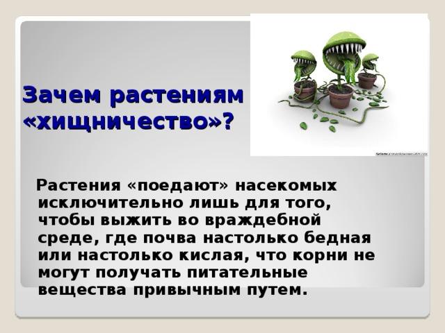 Зачем растениям «хищничество»?  Растения «поедают» насекомых исключительно лишь для того, чтобы выжить во враждебной среде, где почва настолько бедная или настолько кислая, что корни не могут получать питательные вещества привычным путем.