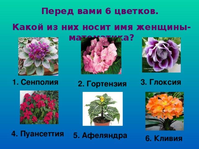 Перед вами 6 цветков. Какой из них носит имя женщины-математика? 1. Сенполия  3. Глоксия 2. Гортензия  4. Пуансеттия 5. Афеляндра  6. Кливия