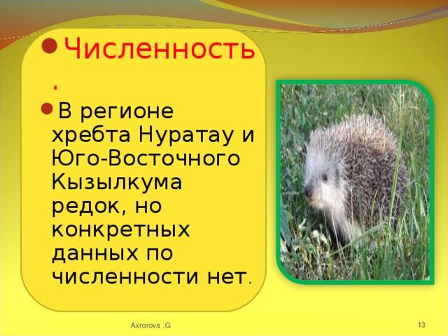 Численность. В регионе хребта Нуратау и Юго-Восточного Кызылкума редок, но конкретных данных по численности нет .
