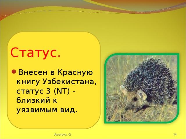 Внесен в Красную книгу Узбекистана, статус 3 (NT) - близкий к уязвимым вид.