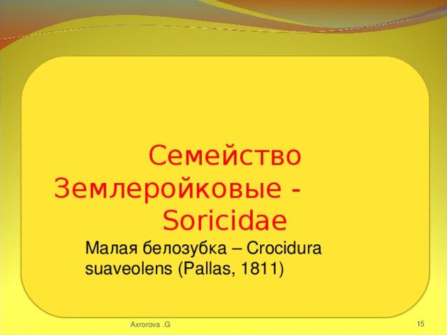 Семейство Землеройковые - Soricidae Малая белозубка – Crocidura suaveolens (Pallas, 1811) Axrorova .G