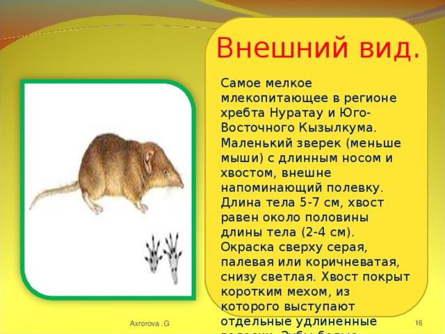 Самое мелкое млекопитающее в регионе хребта Нуратау и Юго-Восточного Кызылкума. Маленький зверек (меньше мыши) с длинным носом и хвостом, внешне напоминающий полевку. Длина тела 5-7 см, хвост равен около половины длины тела (2-4 см). Окраска сверху серая, палевая или коричневатая, снизу светлая. Хвост покрыт коротким мехом, из которого выступают отдельные удлиненные волоски. Зубы белые. Внешний вид. Axrorova .G