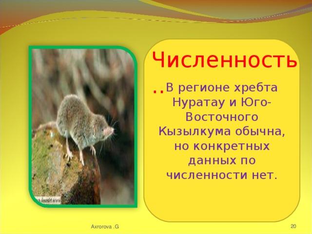 В регионе хребта Нуратау и Юго-Восточного Кызылкума обычна, но конкретных данных по численности нет. Численность.. Axrorova .G