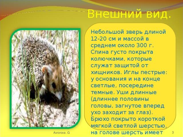 Внешний вид. Небольшой зверь длиной 12-20 см и массой в среднем около 300 г. Спина густо покрыта колючками, которые служат защитой от хищников. Иглы пестрые: у основания и на конце светлые, посередине темные. Уши длинные (длиннее половины головы, загнутое вперед ухо заходит за глаз). Брюхо покрыто короткой мягкой светлой шерстью, на голове шерсть имеет рыжеватый оттенок. Axrorova .G