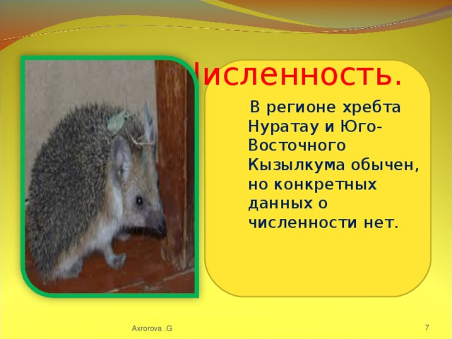 Численность.  В регионе хребта Нуратау и Юго-Восточного Кызылкума обычен, но конкретных данных о численности нет. Axrorova .G