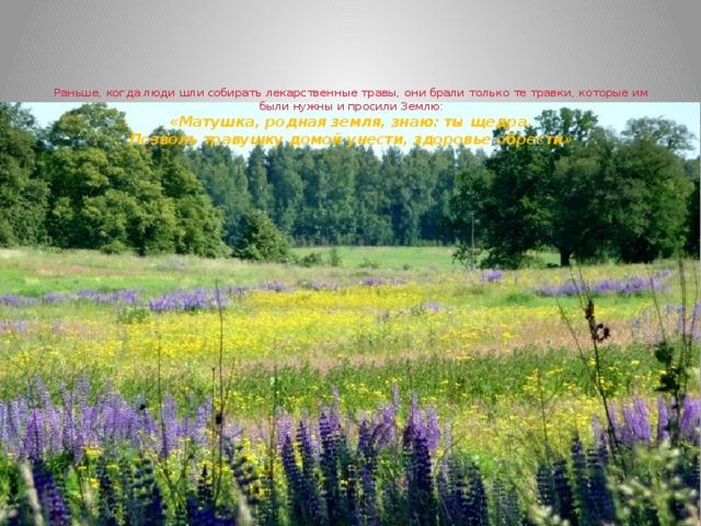Раньше, когда люди шли собирать лекарственные травы, они брали только те травки, которые им были нужны и просили Землю:  «Матушка, родная земля, знаю: ты щедра.  Позволь травушку домой унести, здоровье обрести»