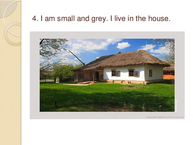 4. I am small and grey. I live in the house.