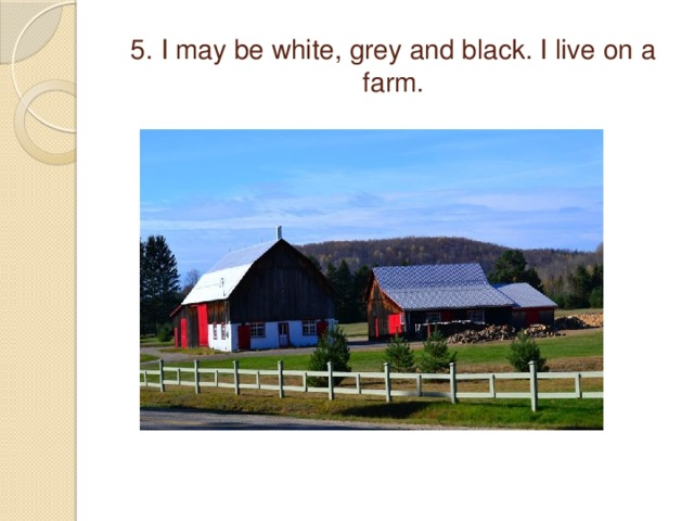 5. I may be white, grey and black. I live on a farm.