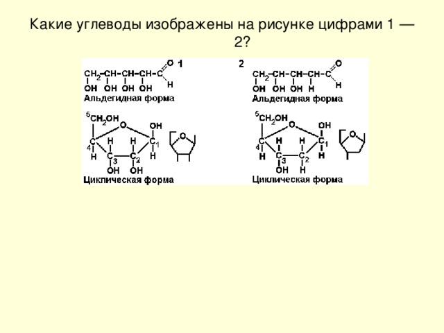 Какие углеводы изображены на рисунке цифрами 1 — 2?