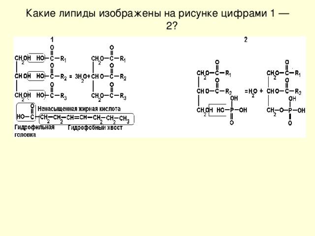 Какие липиды изображены на рисунке цифрами 1 — 2?