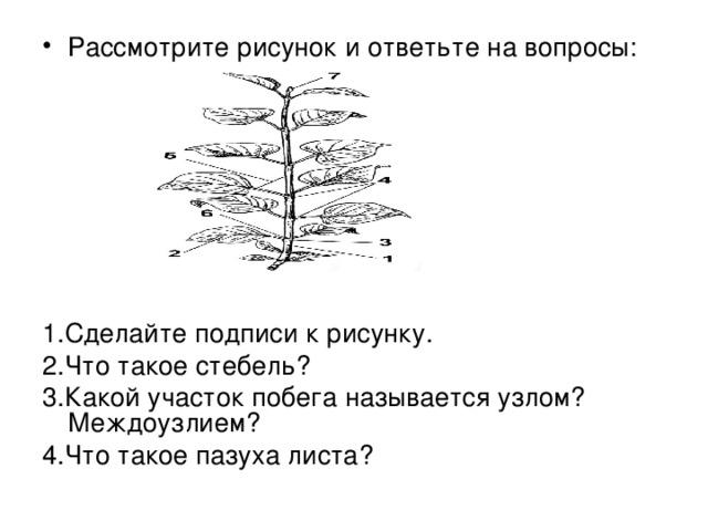 Рассмотрите рисунок и ответьте на вопросы: