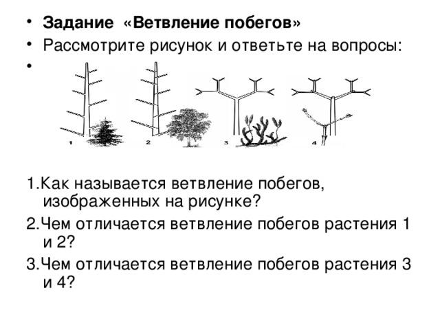 Задание «Ветвление побегов» Рассмотрите рисунок и ответьте на вопросы: