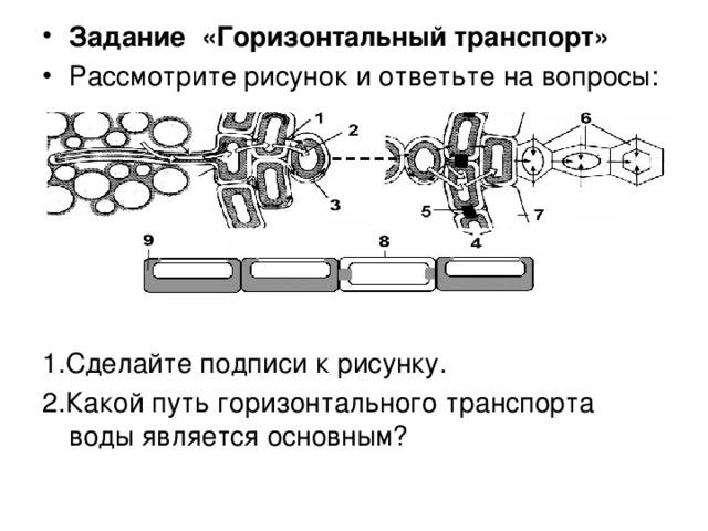 Задание «Горизонтальный транспорт» Рассмотрите рисунок и ответьте на вопросы: