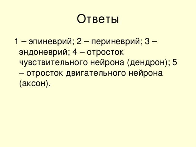1 – эпиневрий; 2 – периневрий; 3 – эндоневрий; 4 – отросток чувствительного нейрона (дендрон); 5 – отросток двигательного нейрона (аксон).