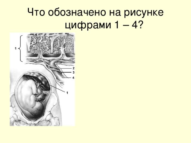 Что обозначено на рисунке цифрами 1 – 4?