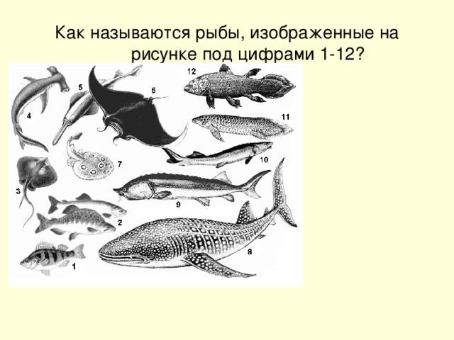 Как называются рыбы, изображенные на рисунке под цифрами 1-12?
