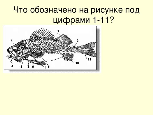 Что обозначено на рисунке под цифрами 1-11?