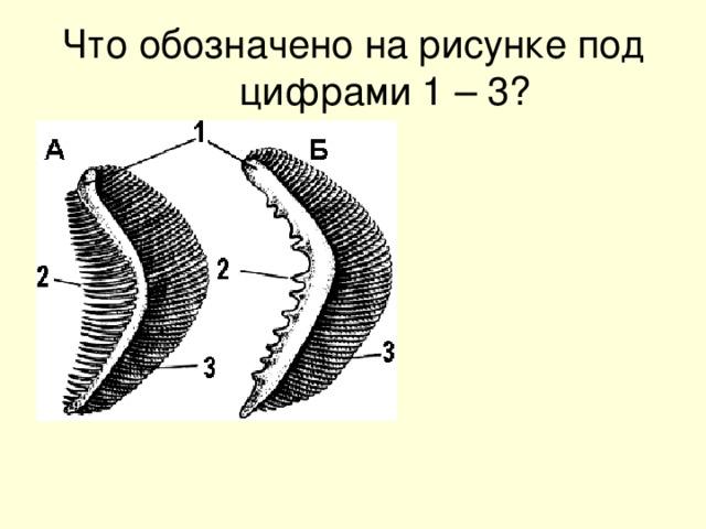 Что обозначено на рисунке под цифрами 1 – 3?