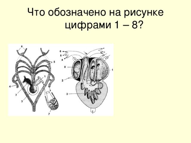 Что обозначено на рисунке цифрами 1 – 8?