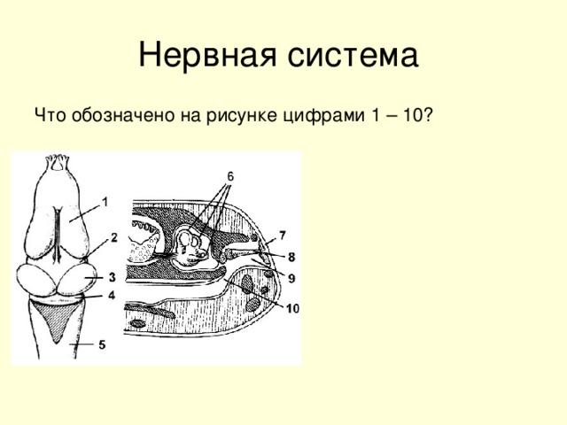 Что обозначено на рисунке цифрами 1 – 10?