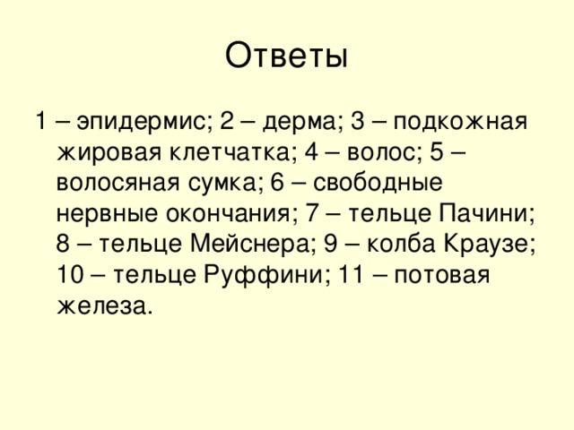 1 – эпидермис; 2 – дерма; 3 – подкожная жировая клетчатка; 4 – волос; 5 – волосяная сумка; 6 – свободные нервные окончания; 7 – тельце Пачини; 8 – тельце Мейснера; 9 – колба Краузе; 10 – тельце Руффини; 11 – потовая железа.