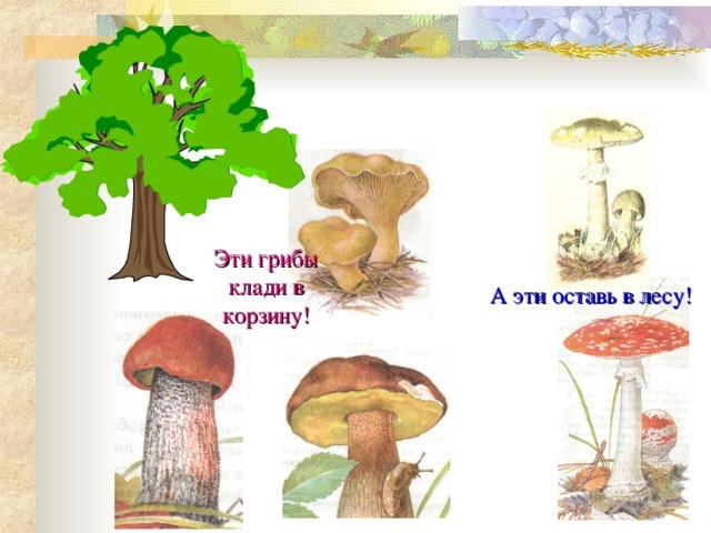 Эти грибы клади в корзину! А эти оставь в лесу!
