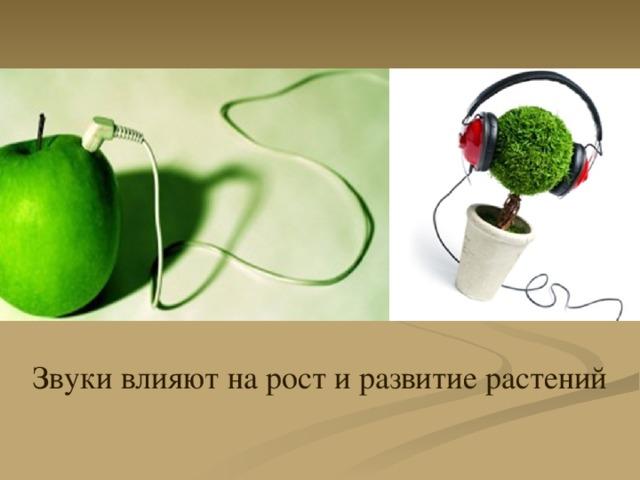 Звуки влияют на рост и развитие растений