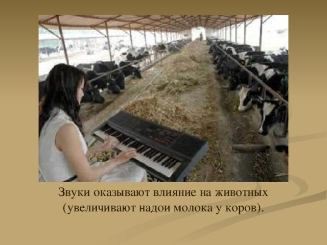 Звуки оказывают влияние на животных  (увеличивают надои молока у коров).