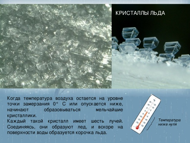 КРИСТАЛЛЫ ЛЬДА Когда температура воздуха остается на уровне точки замерзания 0° С или опускается ниже, начинают образовываться мельчайшие кристаллики. Каждый такой кристалл имеет шесть лучей. Соединяясь, они образуют лед, и вскоре на поверхности воды образуется корочка льда. Температура ниже нуля