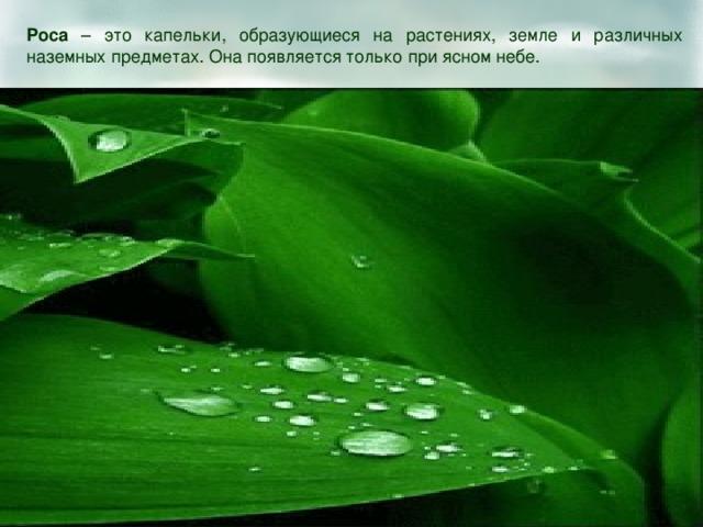 Роса – это капельки, образующиеся на растениях, земле и различных наземных предметах. Она появляется только при ясном небе.