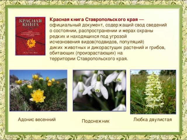 Редкие растения ставропольского края доклад 6344